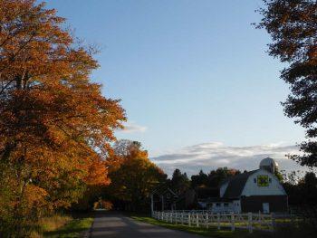Fall Trees2