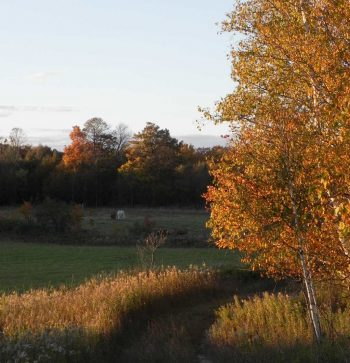 Fall Trees3