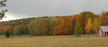 Fall Trees6