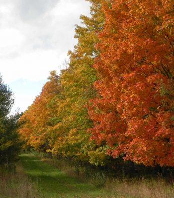 Fall Trees7