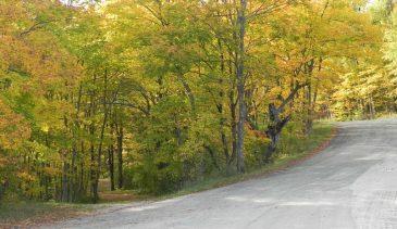 Gudmundsen-Drive-trees