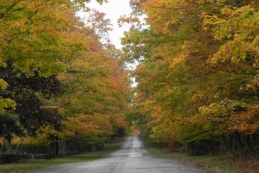 Swenson-road-fall-view