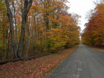 Swenson-Road-Washington-Island