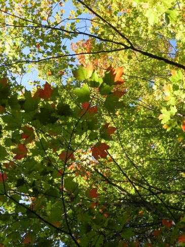 Washington-Island-leaves-changing
