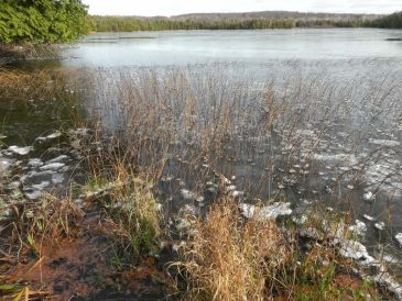 November-Little-Lake-ice