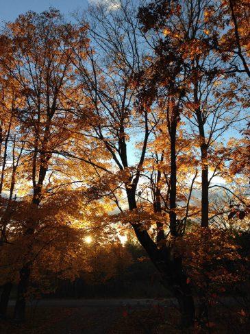 Washington-Island-golden-sun-October