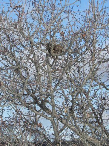 Hidden-nest