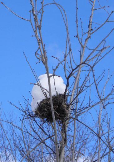 Snowy-nest