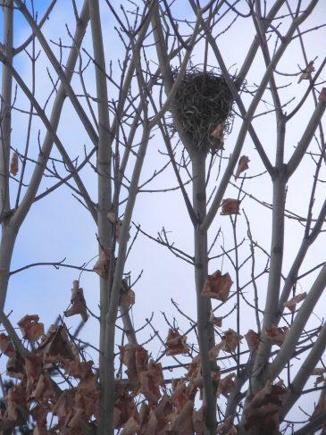 Treetop-nest