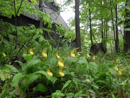 Stave Church Lady Slippers