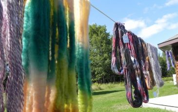 Dyed fleece and yarn