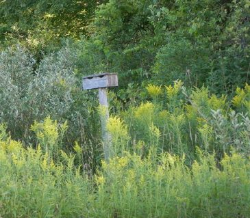 Jackson Harbor Road Birdhouse