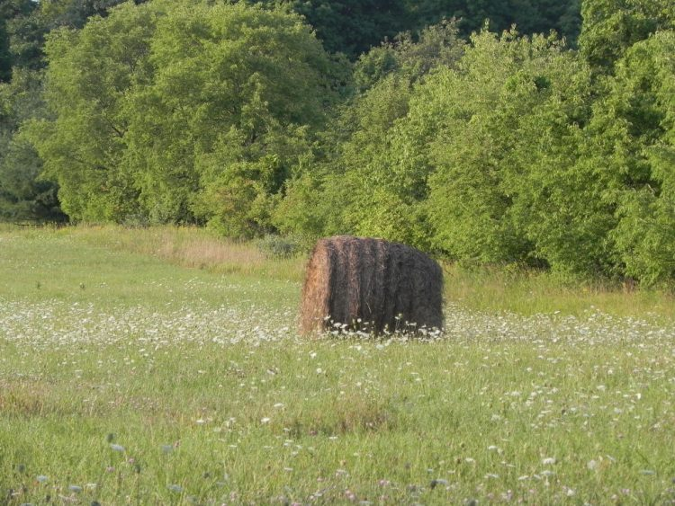 Haybale and Wildflowers