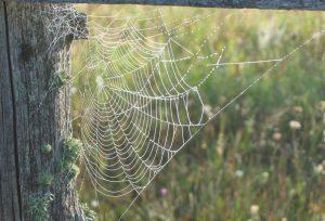 Dewy Web2