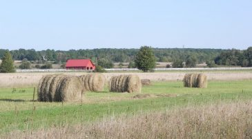 September Haybales