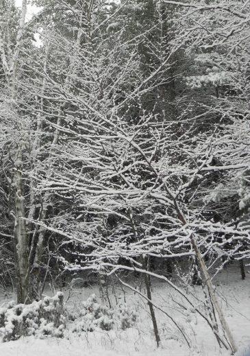 November 9 snowfall1
